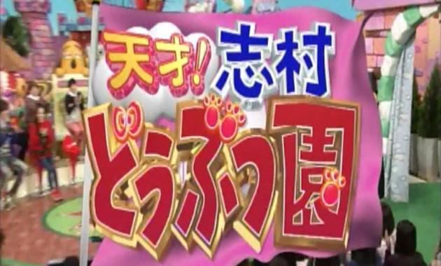 天才!志村どうぶつ園|日本テレビ 2016年1月23日放送 「今夜は、ネコスペシャル!」